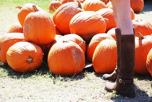 Pumpkin Patches In Central Texas The Austin Gastronomist